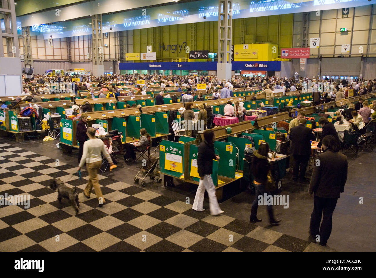 Crufts at the NEC - Stock Image