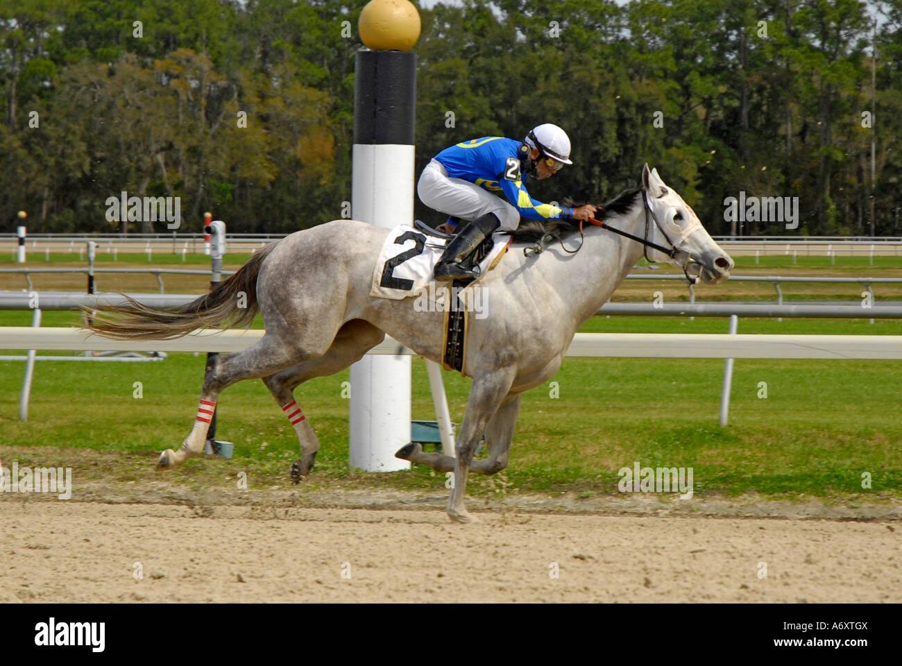 Thoroughbred horse racing Tampa Bay Downs Florida FL Tampa - Stock Image