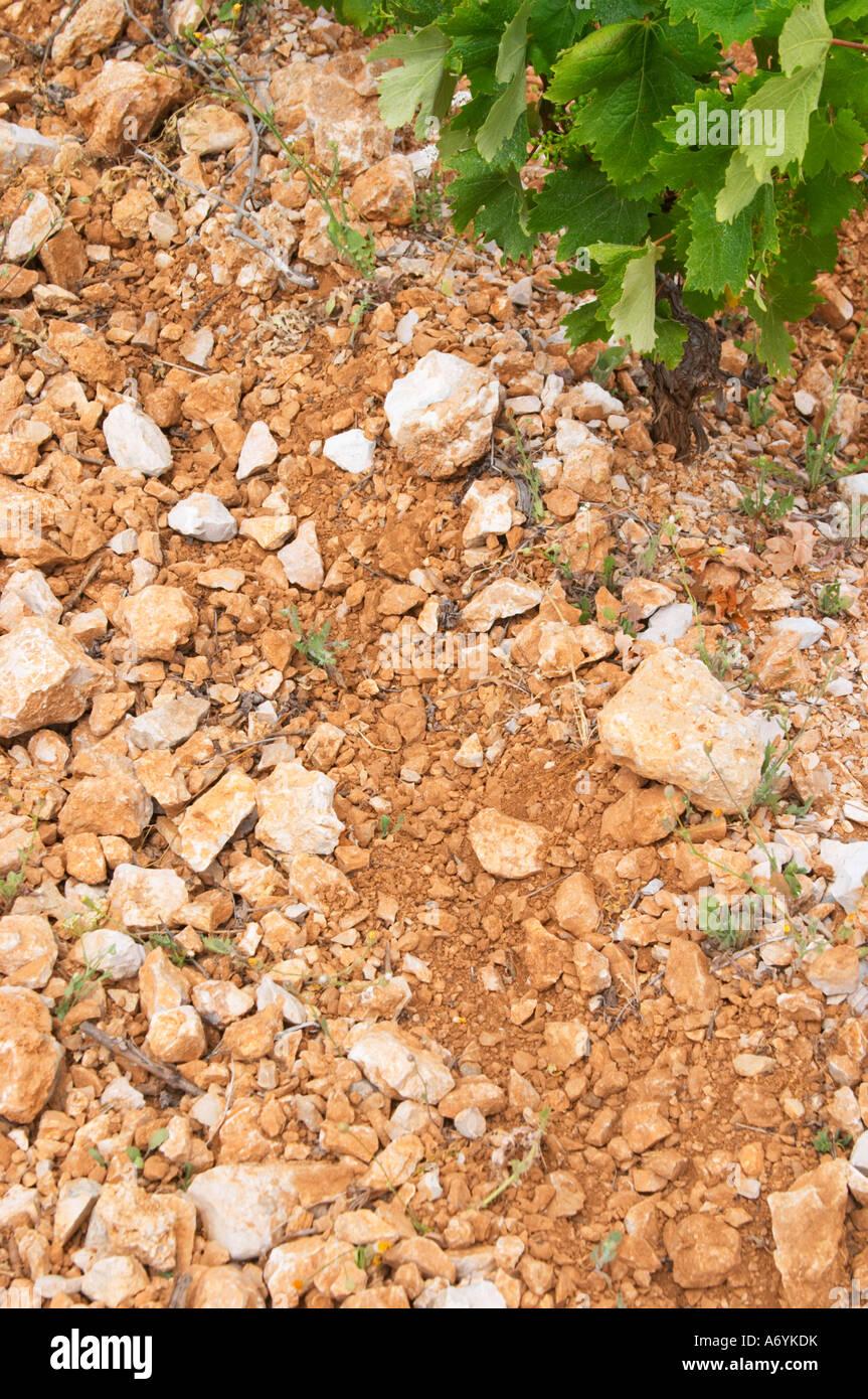 Domaine d'Aupilhac. Montpeyroux. Languedoc. Terroir soil. France. Europe. Vineyard. Soil with stones rocks. - Stock Image