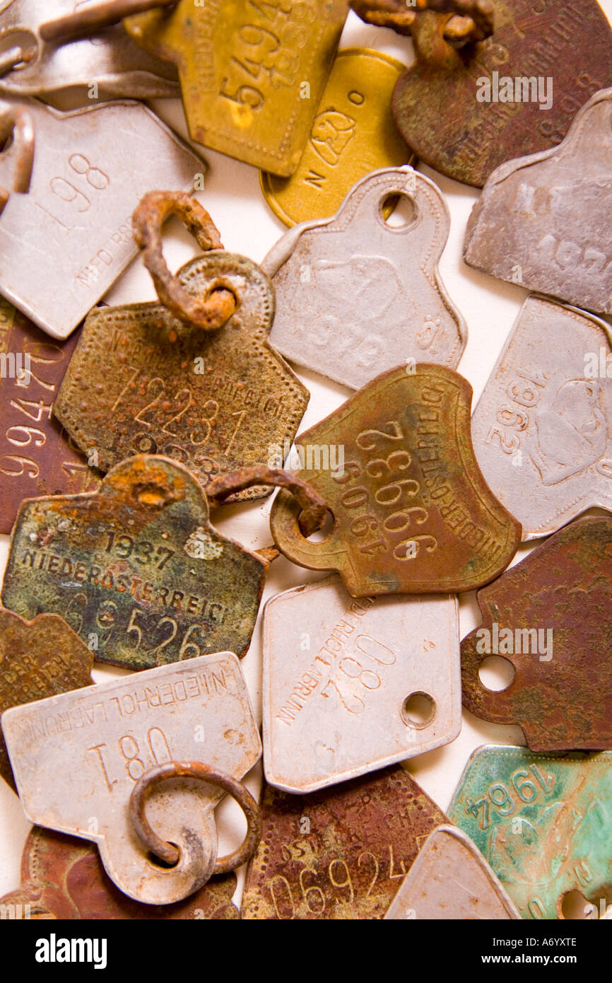 Rusty dog licence disc - Stock Image