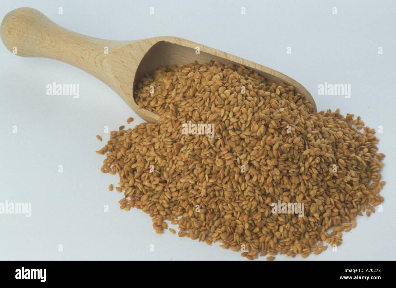 food cereals flax linseed lin linum usitatissimum - Stock Image