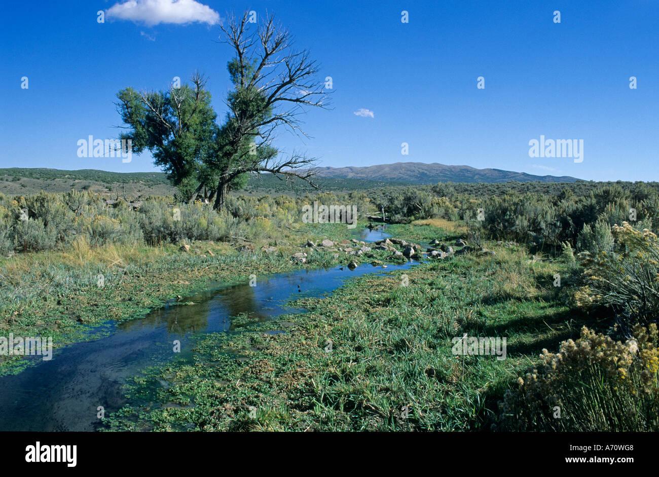 Creek at Rock Springs, historic California Trail, Nevada, USA - Stock Image