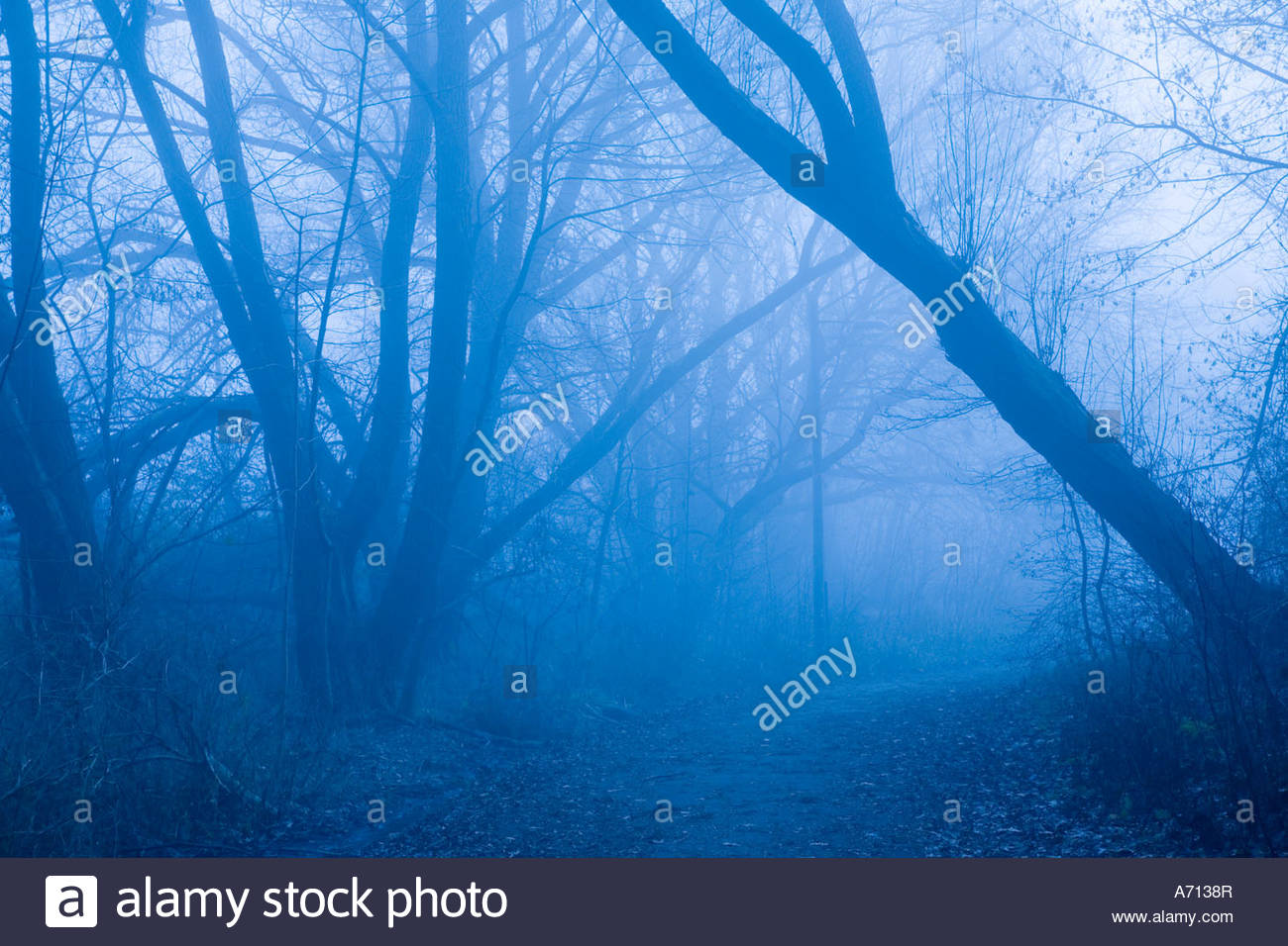 Fog in Bluffers Park located in the Scarborough area of Toronto Ontario Canada Stock Photo