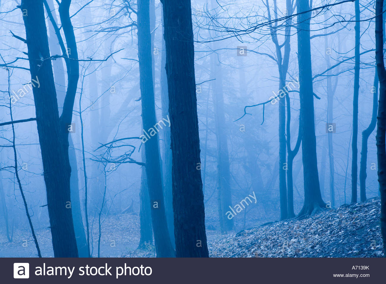 Fog in Bluffers Park located in the Scarborough area of Toronto Ontario Canada - Stock Image