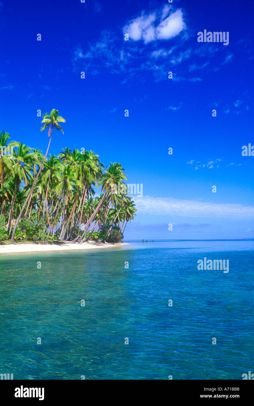 Coconut palm trees on beach in Fiji South Pacific Ocean - Stock Image
