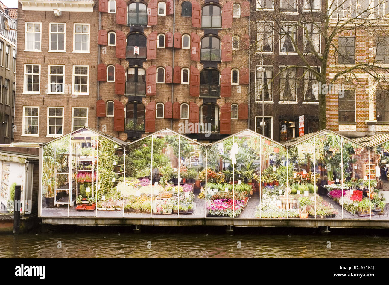 Floating Flower Market.Floating Flower Market Singel Canal Amsterdam Holland