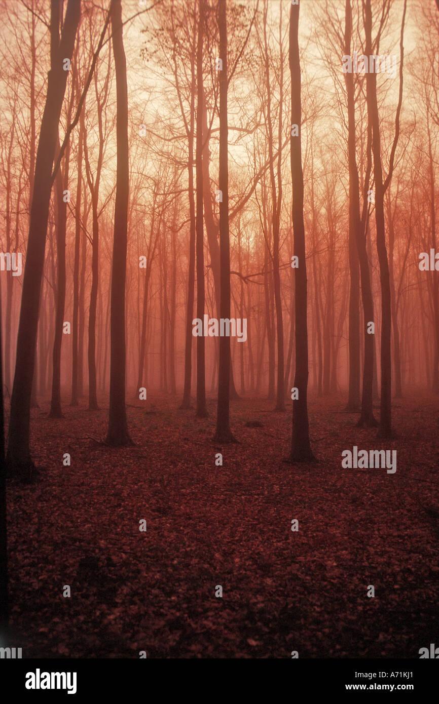 Autumn Misty morning - Stock Image