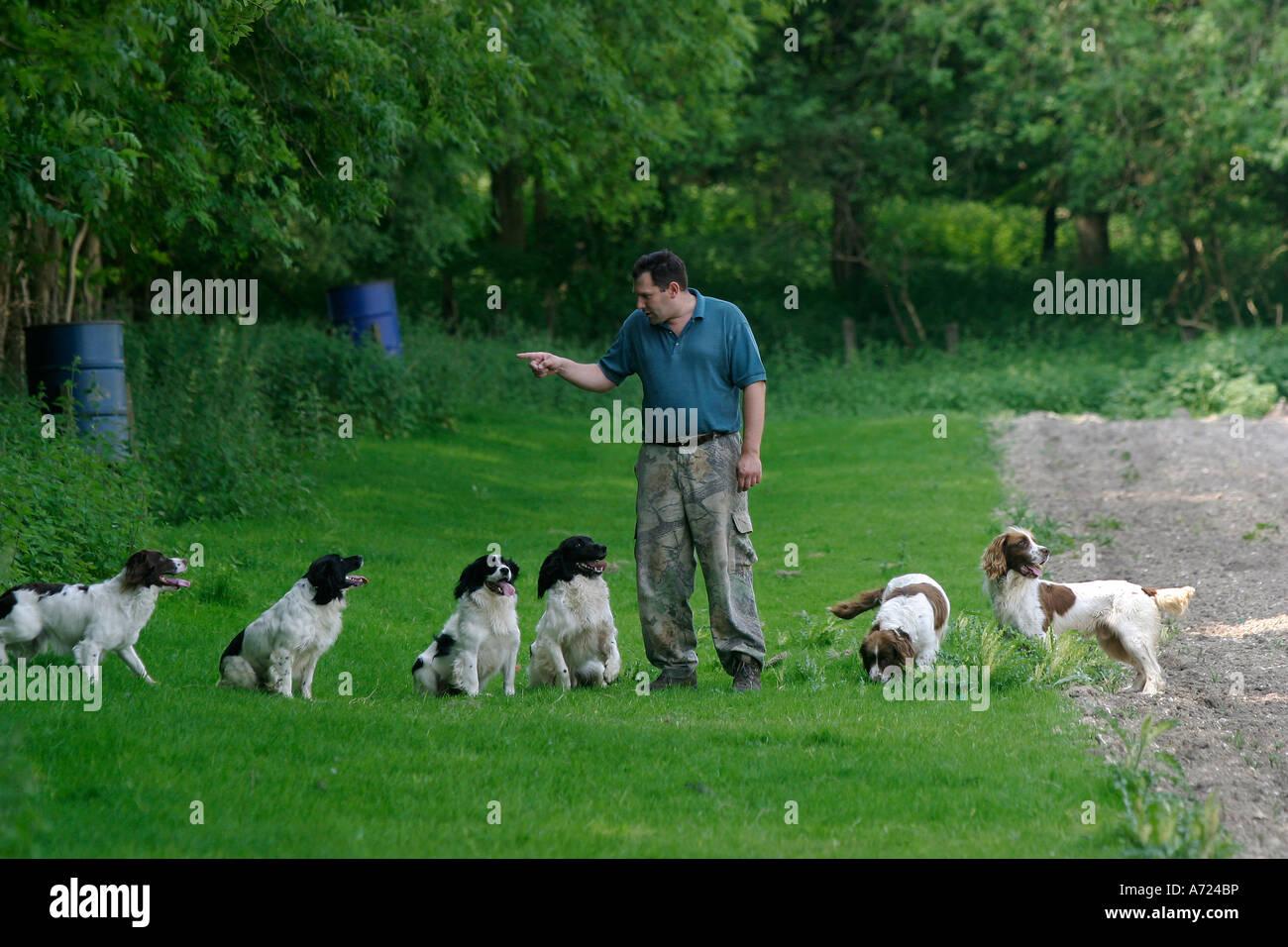 Mike Deakin, head gamekeeper on the Hambleden Estate exercises his gun dogs - Stock Image