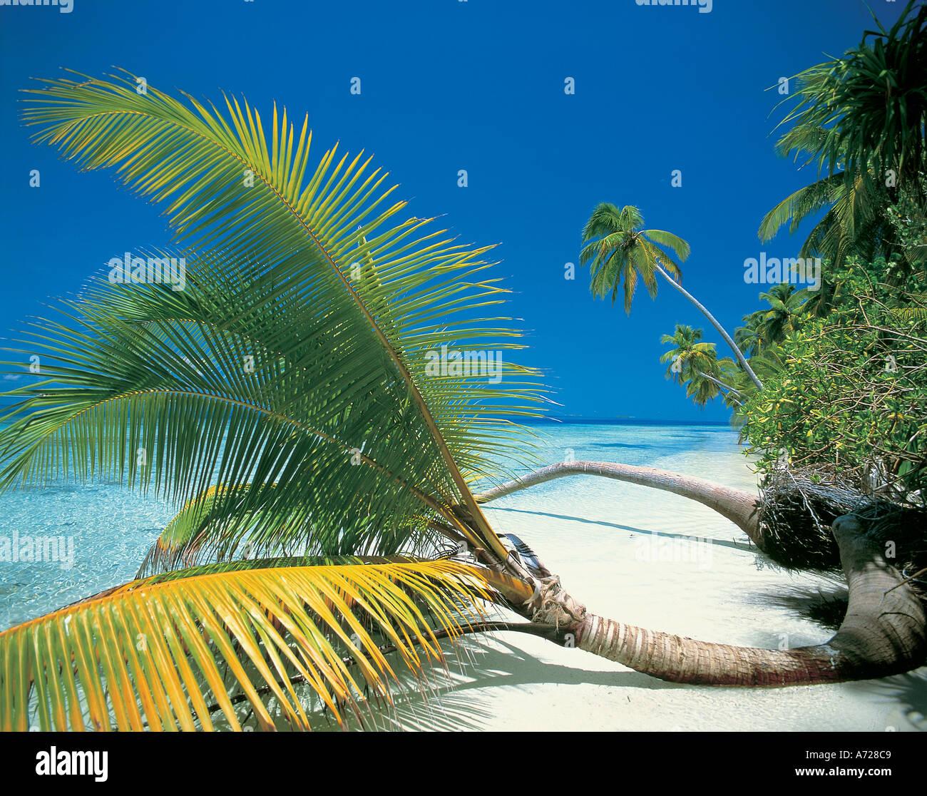 Tropical Island Beach Scene On Ari Atoll Maldive Islands Indian