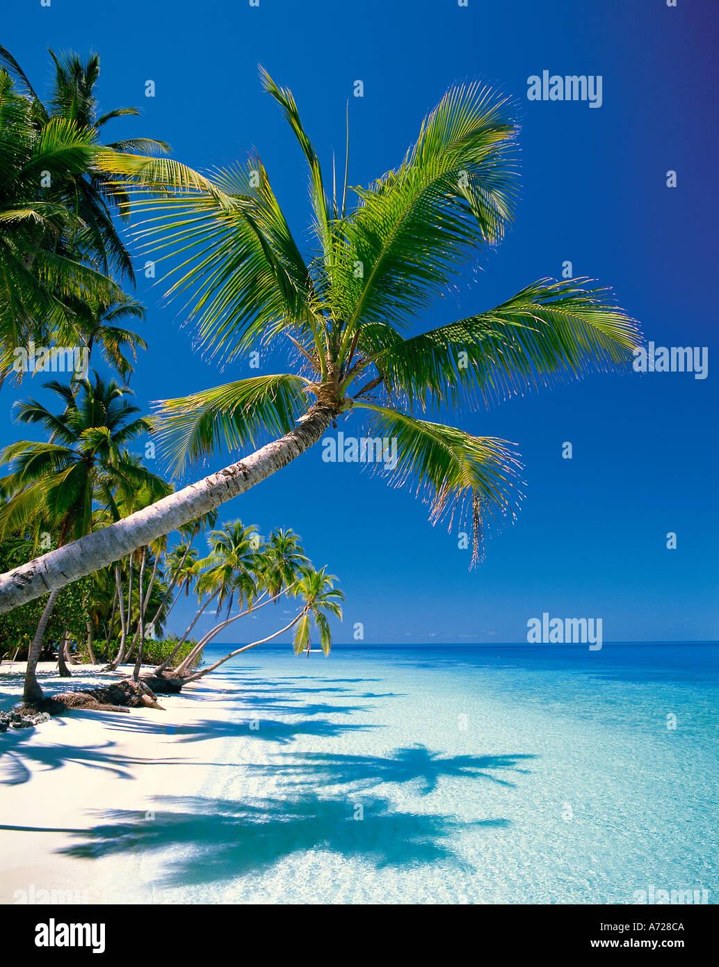 Tropical Island Beach Scene On Male Atoll Maldive Islands Indian