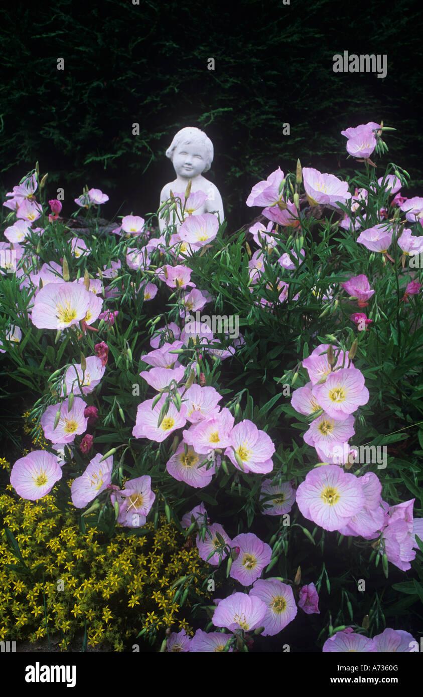 Poppy like flowers stock photos poppy like flowers stock images pale pink poppy like flowers stock image mightylinksfo