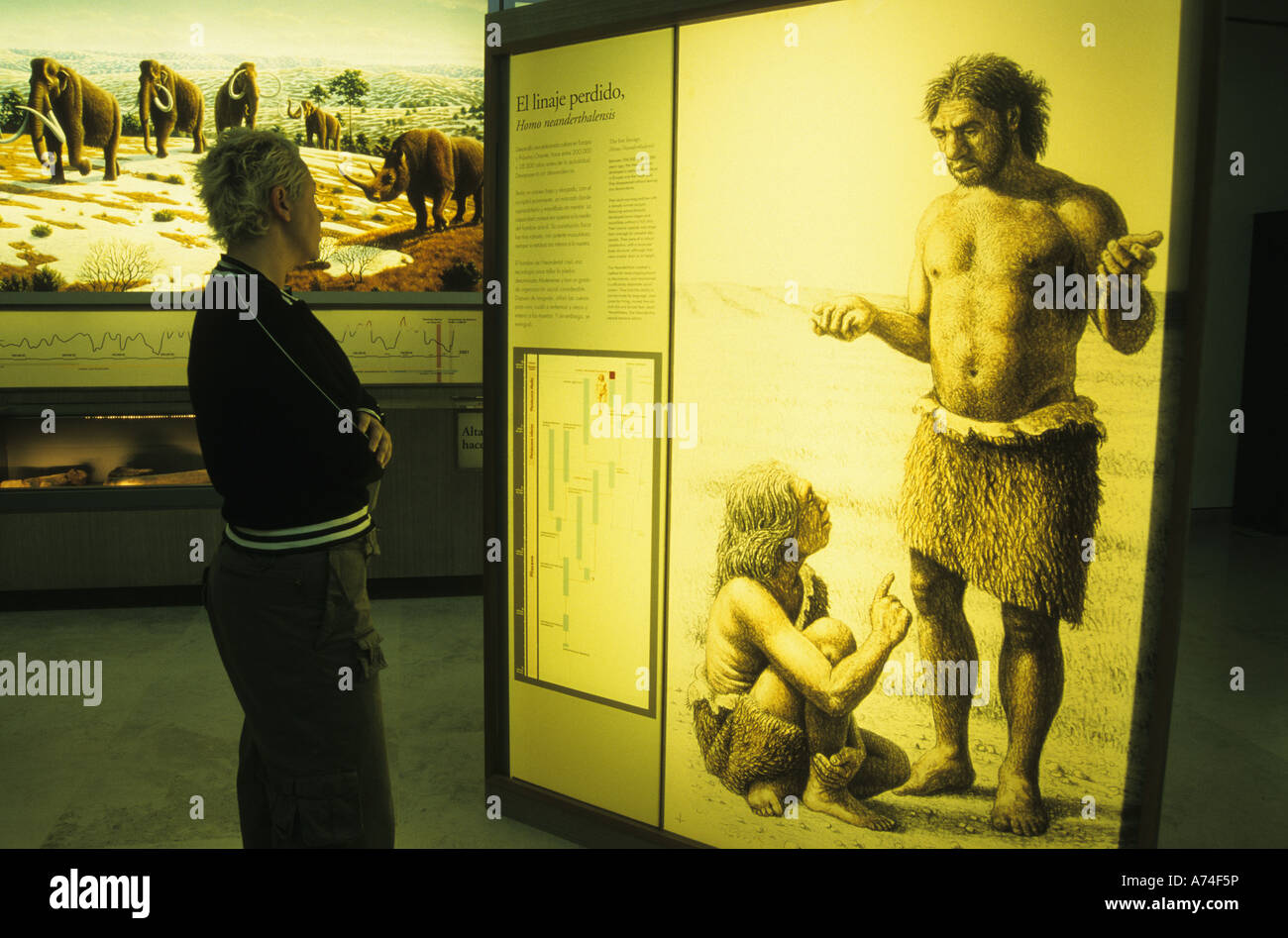 Display of human evolution ALTAMIRA NEO CAVE MUSEUM Santillana del Mar Cantabria Spain - Stock Image