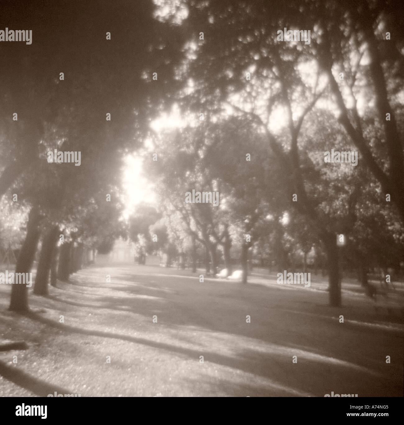 Sunlit Path and Trees - Public Gardens of the Villa Borghese, Rome - Stock Image
