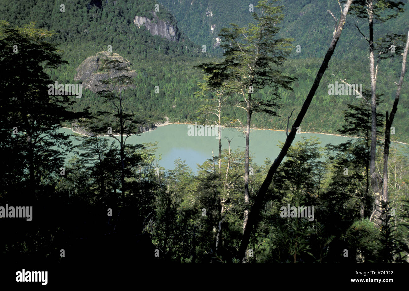 South America, Chile, Patagonia, Aisen,  Queulat National Park, Tempanos lagoon - Stock Image