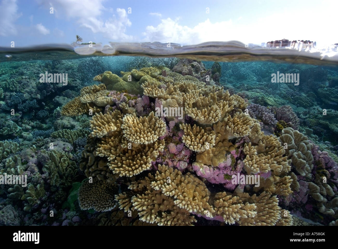 Split image of pristine coral reef and sky Rongelap Atoll Marshall Islands Micronesia - Stock Image