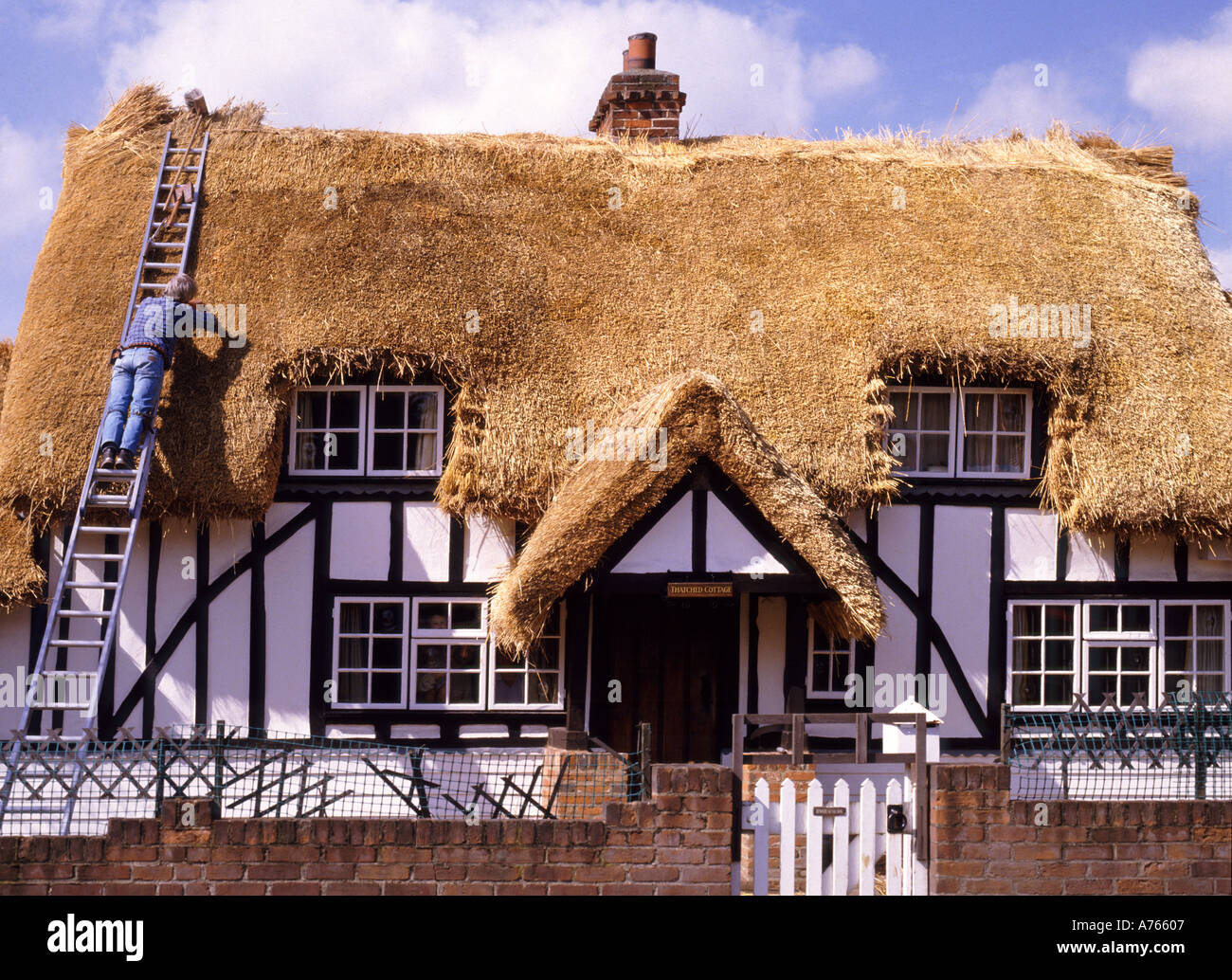 Thatcher working off ladder at house having new thatched roof on half timbered old black and white English country cottage Essex England UK - Stock Image
