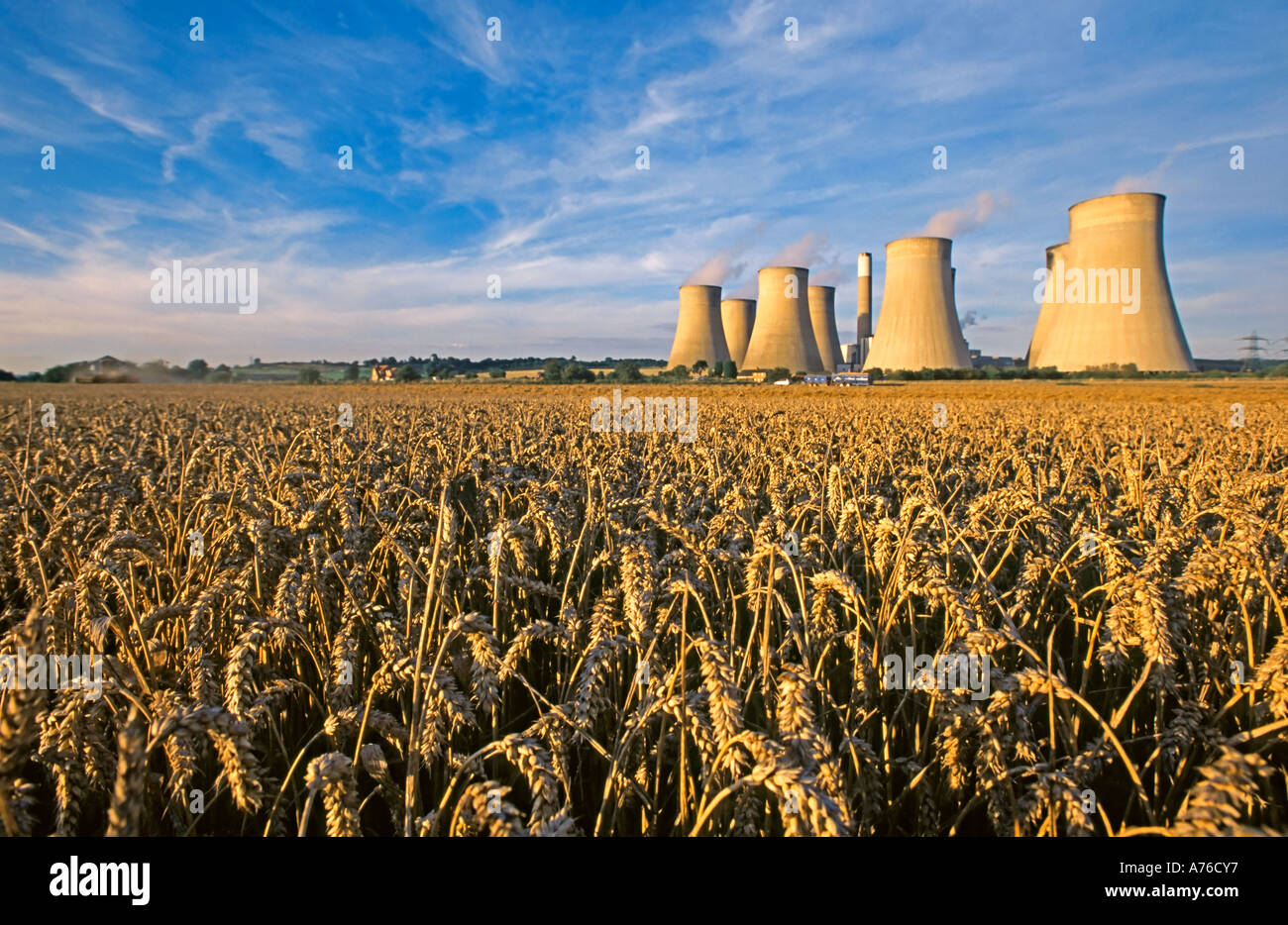 Amber coloured wheat fields with Ratcliffe on Sour coal fired power station behind in the late afternoon sun. Stock Photo