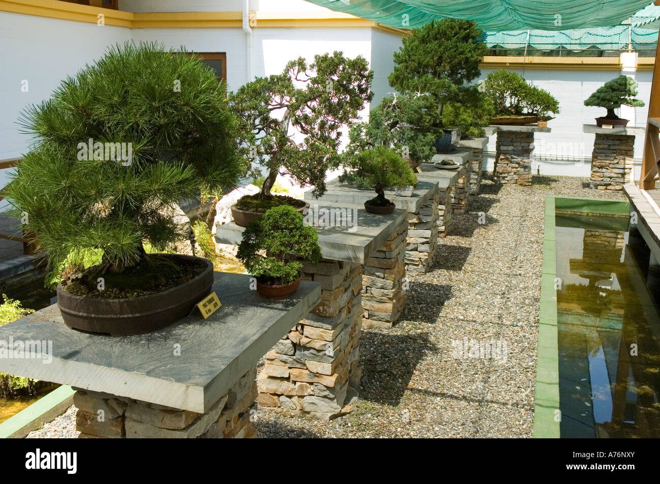 Museo Bonsai High Resolution Stock Photography And Images Alamy