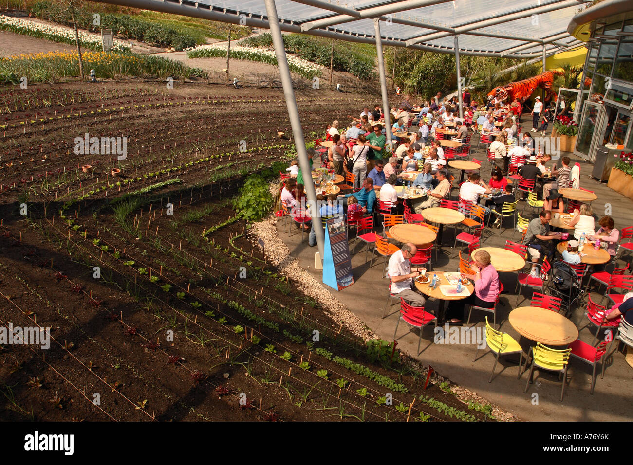 The Eden Project Cornwall open air cafe dinning area alongside fresh ...
