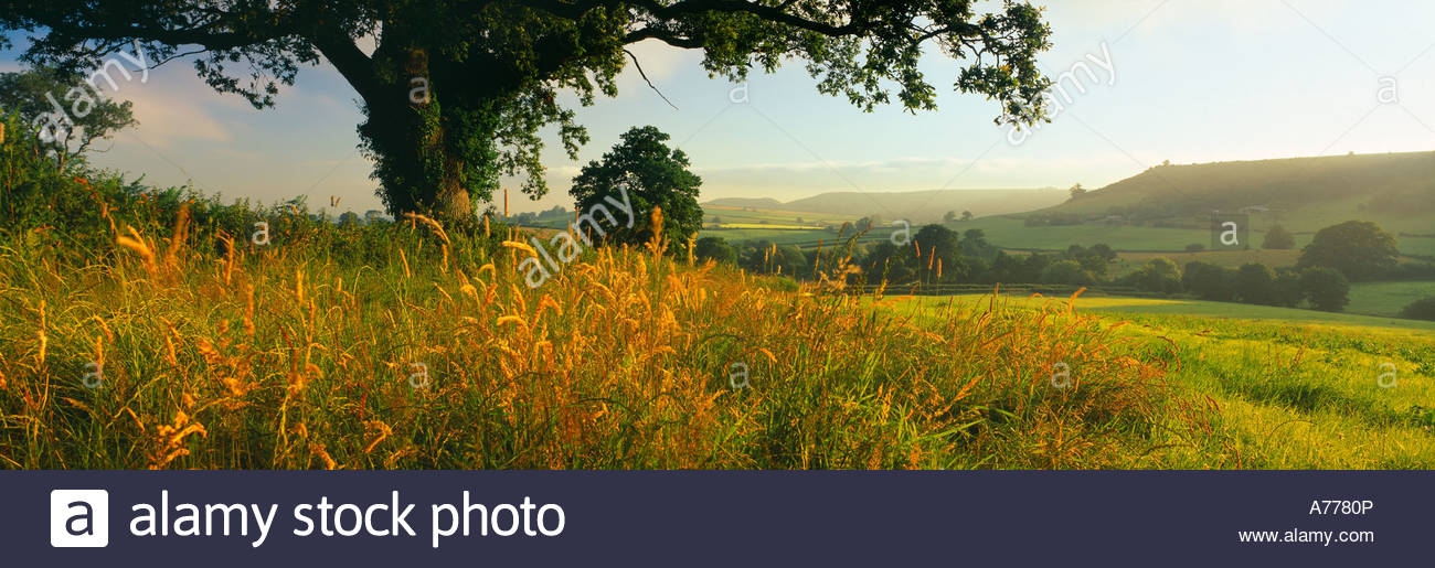 rolling countryside near Sandford Orcas nr Sherborne Dorset England UK - Stock Image