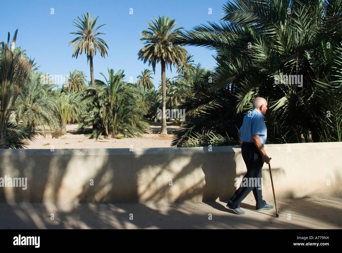 Almassera path in The Elx Palm Grove / ELCHE / Spain - Stock Image