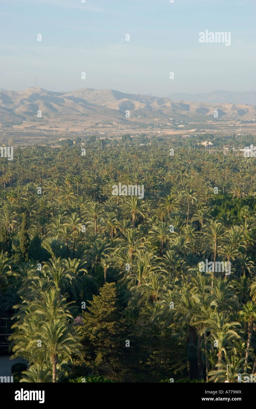 The Elx Palm Grove ELCHE Spain - Stock Image