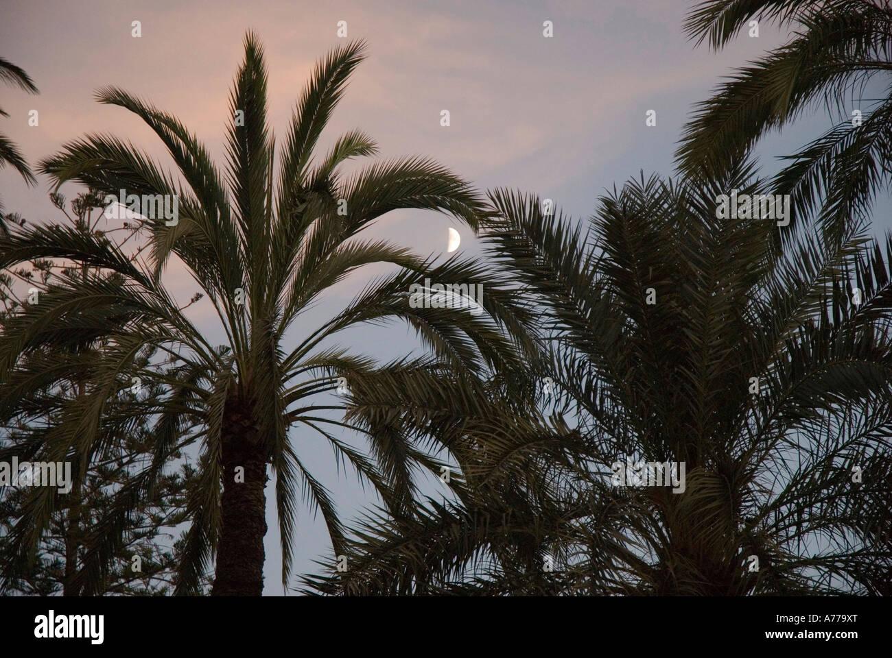 The Elx Palm Grove ELCHE Spain - Stock Image