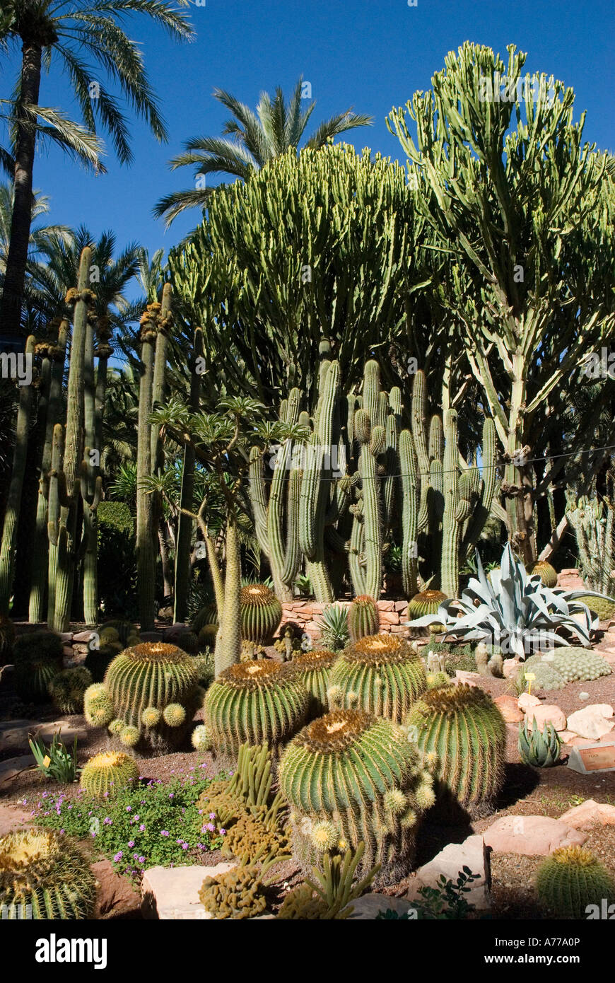 Priest Orchard in The Elx Palm Grove ELCHE Spain - Stock Image