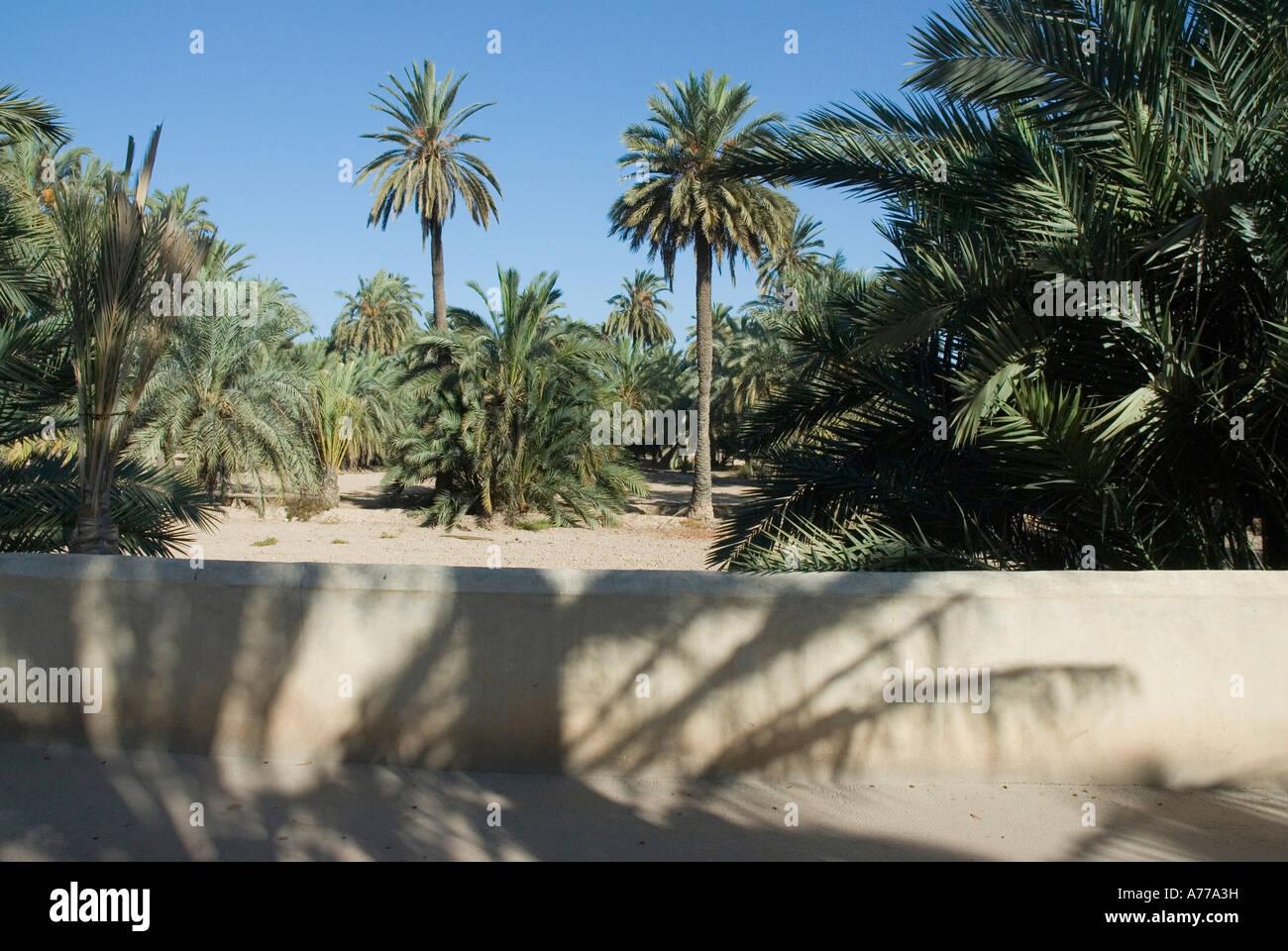 Almassera path in The Elx Palm Grove ELCHE Spain - Stock Image