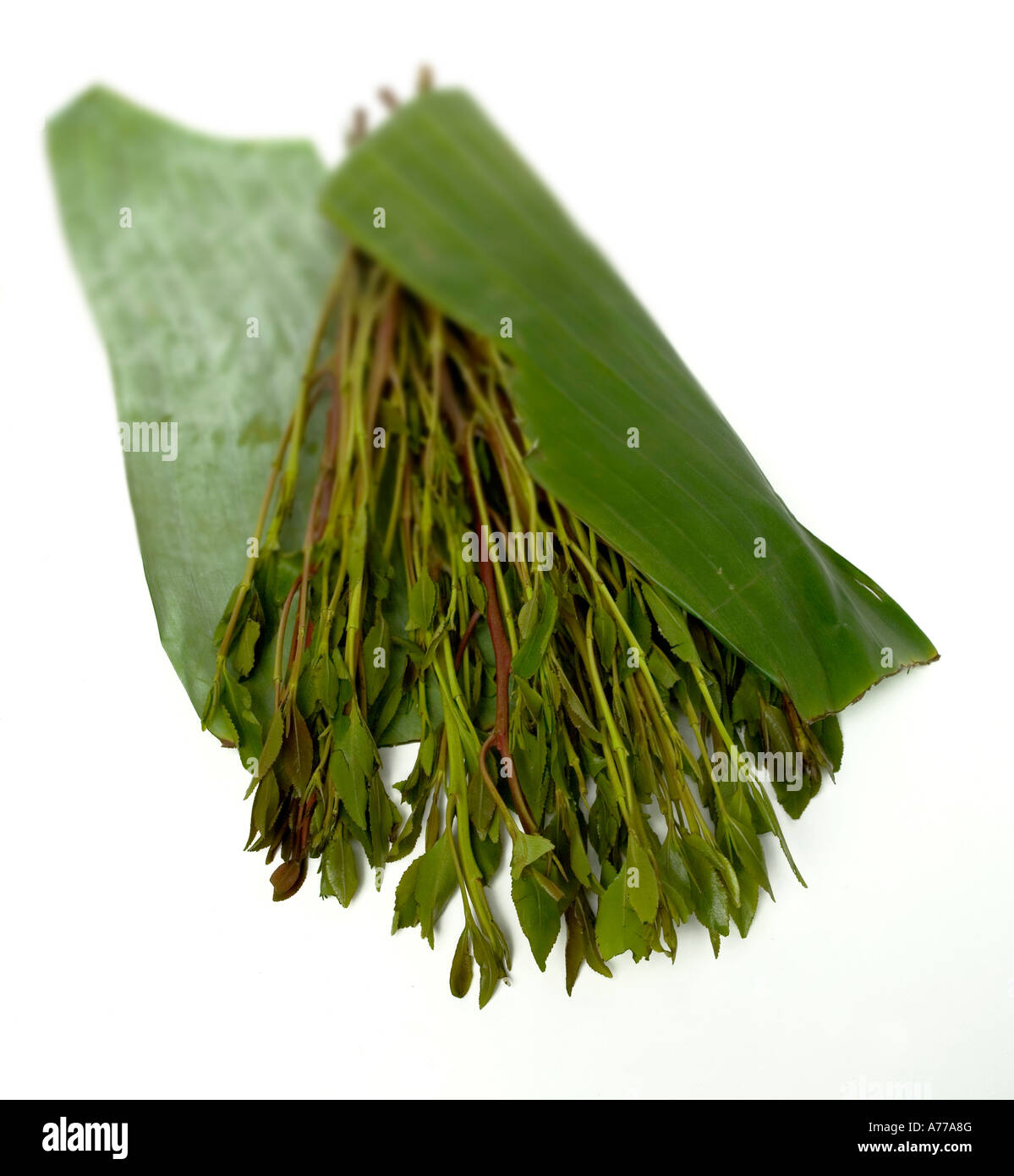 A bunch of Khat or Qat or Gat  Legally sold for £5 GBP or