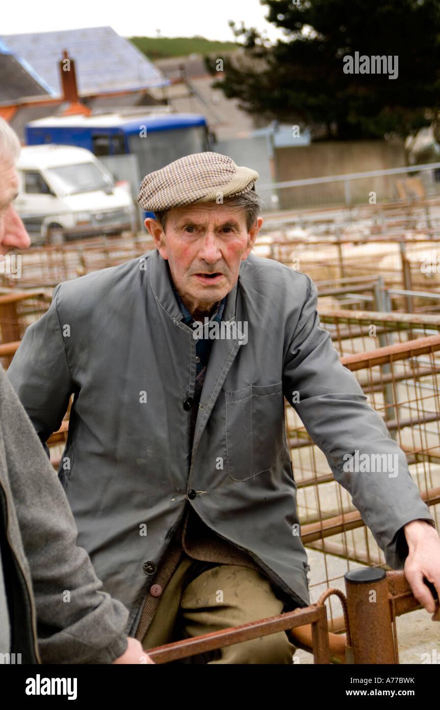 Old welsh farmer at Crymych sheep market Pembrokeshire wales cymru ... 6918f05a01fb