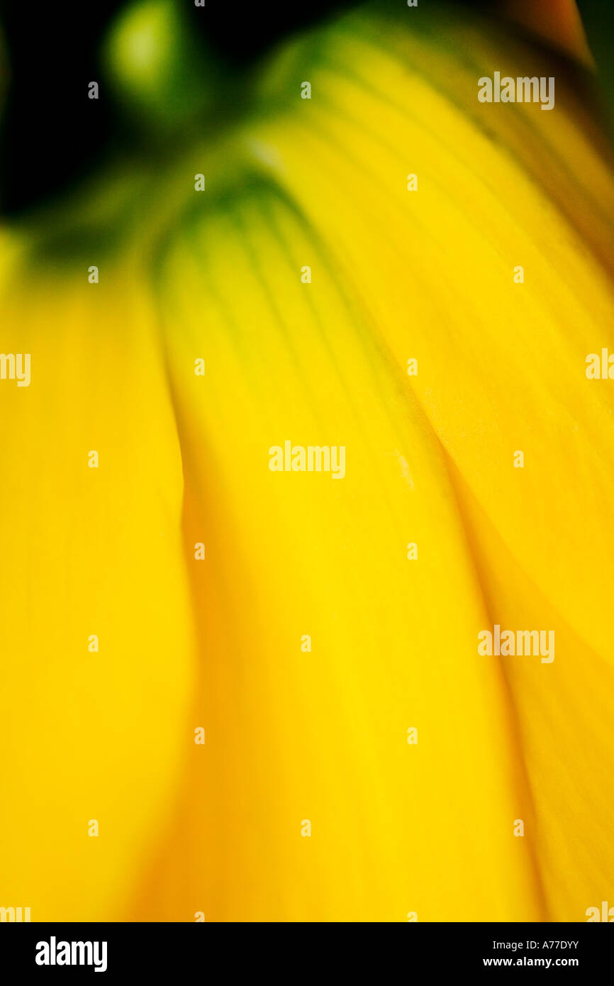Fritillaria Imperialis Imperalis Crown Imperial Abstract Fine Art