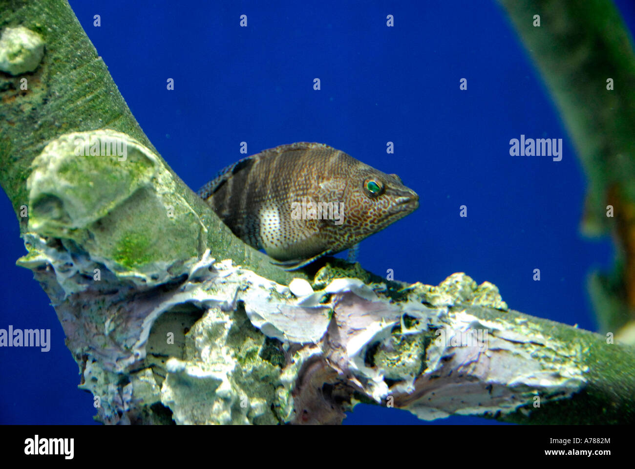thousands of species of tropical fish and other aquatic animals are