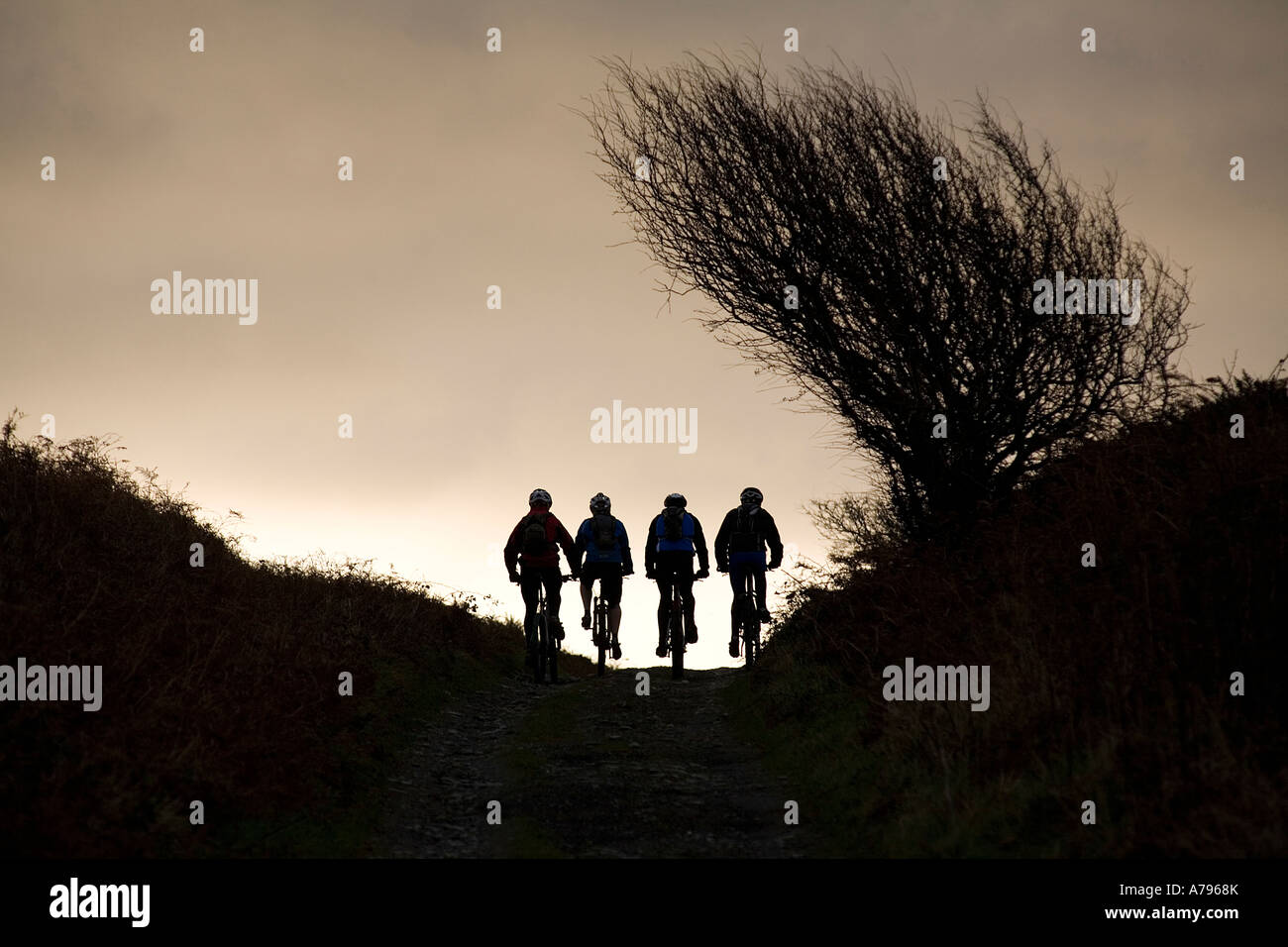 Mountain Bikers Ride in the Early Morning in the UK - Stock Image