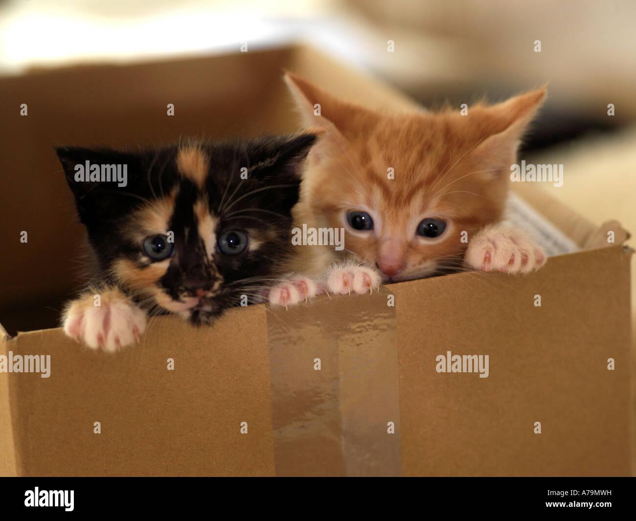 Kitten ginger mfc