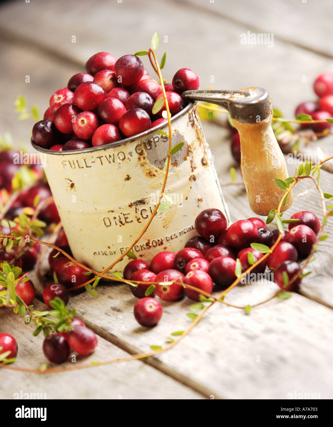 antique flour sifter full of fresh cranberries - Stock Image