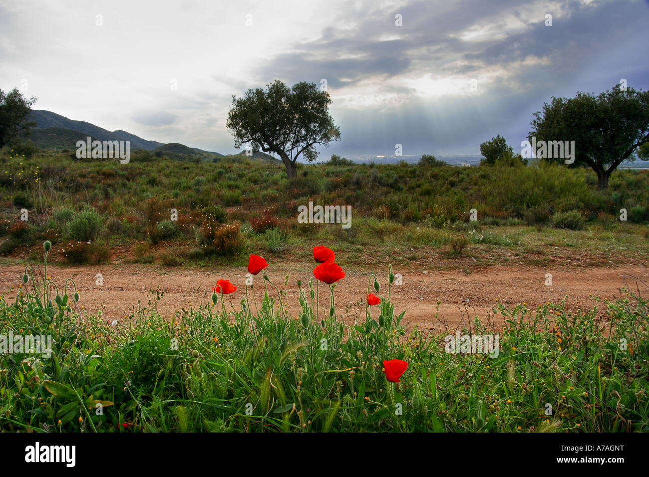 Indigenous vegetation to the area of Murcia, in southern Spain Stock Photo