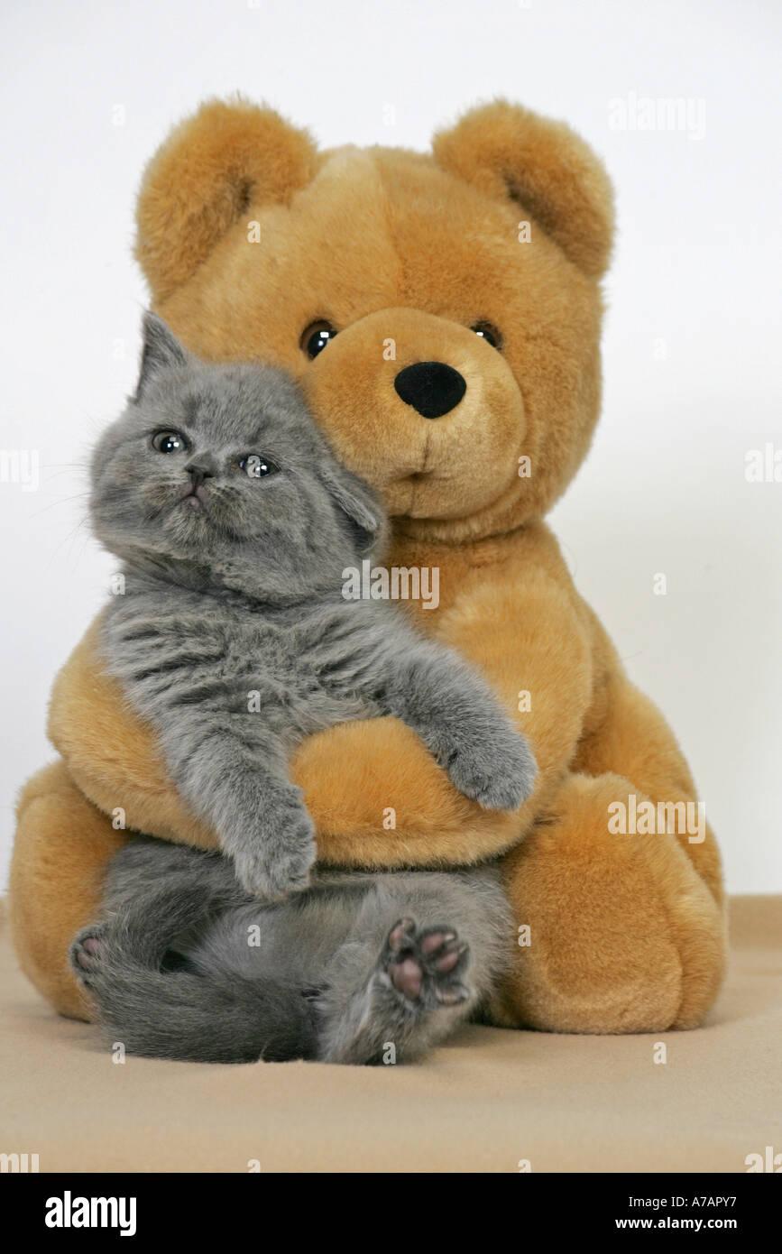 KITTEN WITH TEDDY BEAR Stock Photo - Alamy