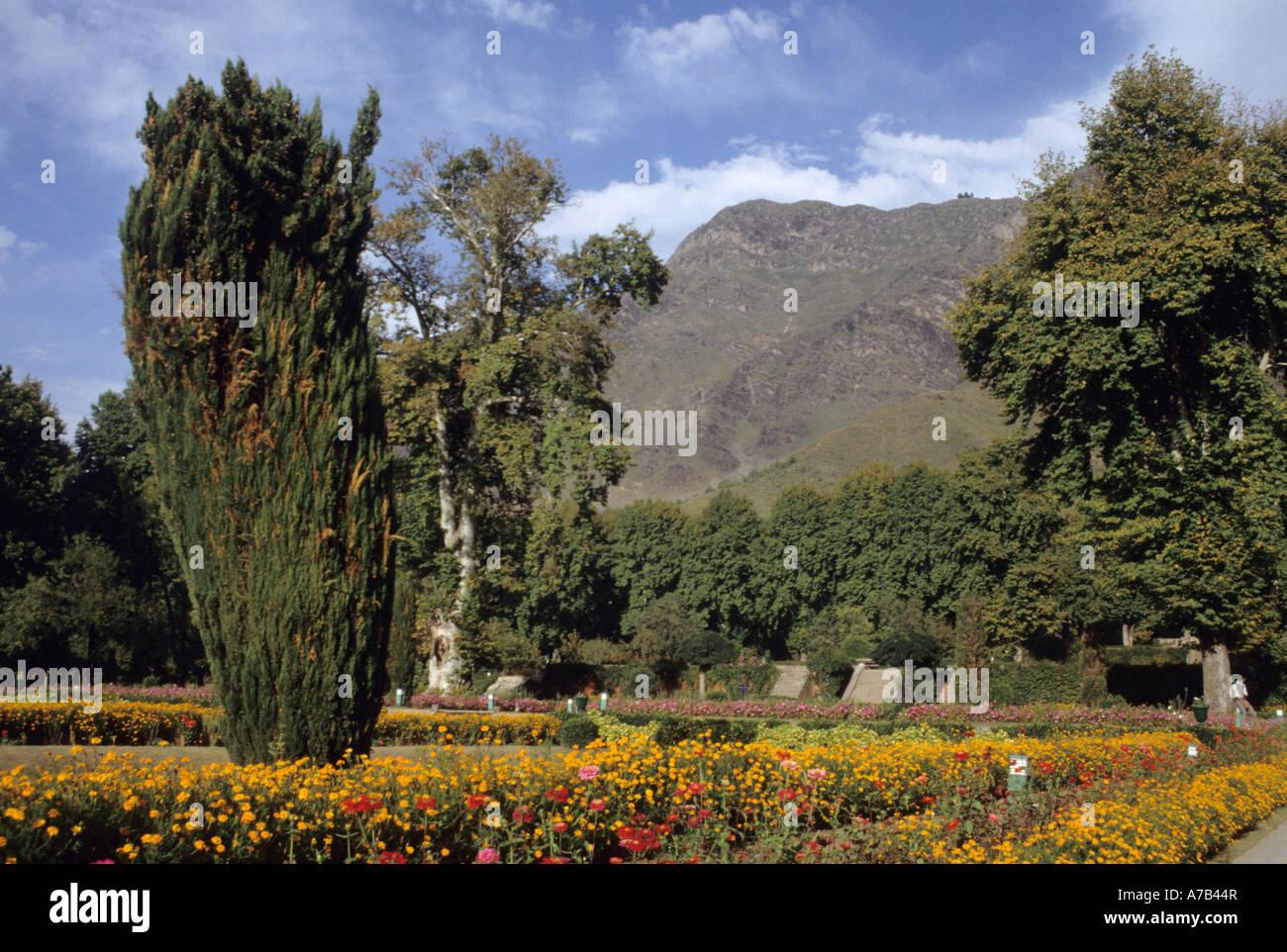 North India Local Caption Jammu Kashmir Srinigar Nishat Gardens ...
