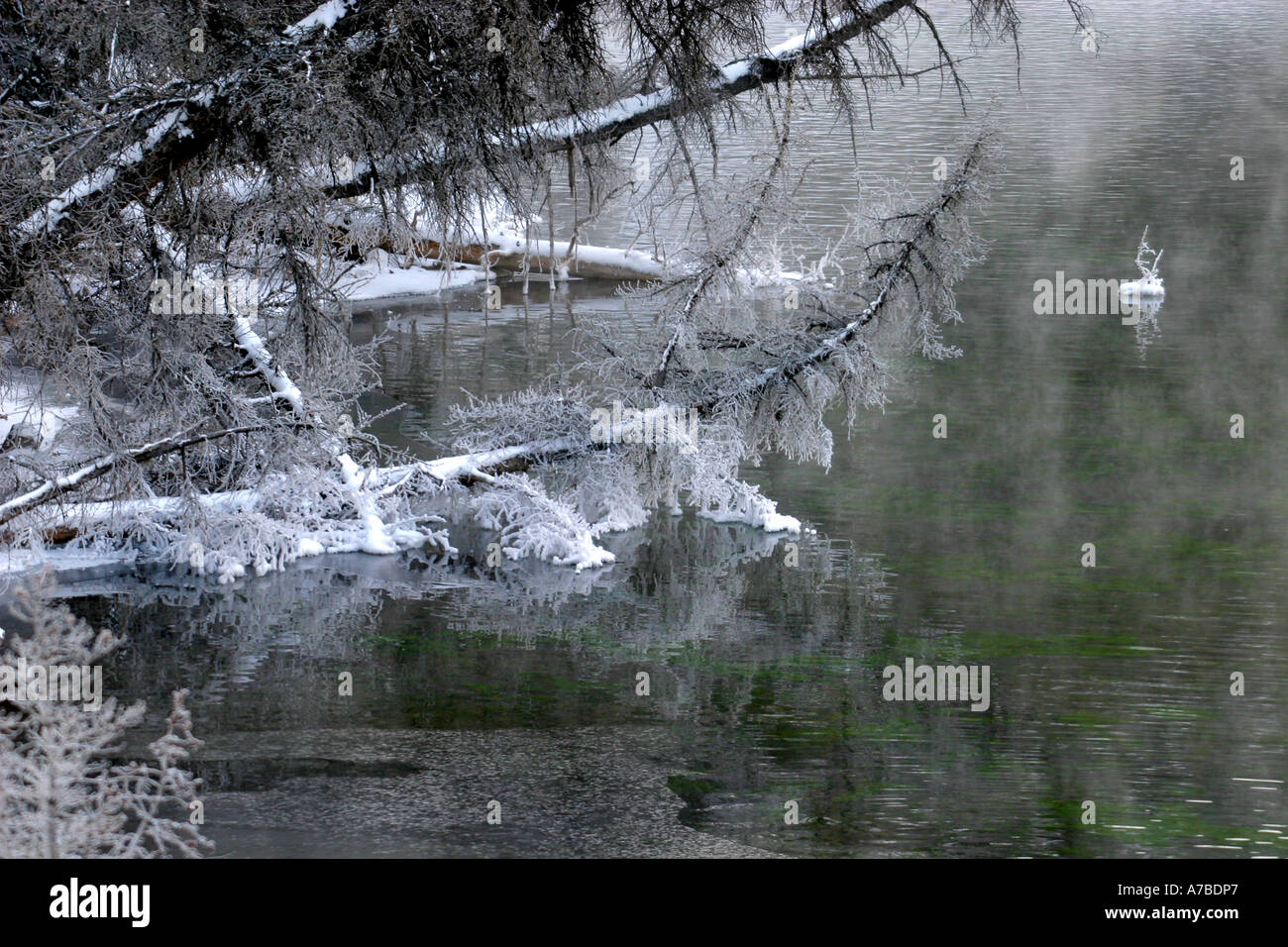 Hoar frost covered branches reflected in a pond - Stock Image