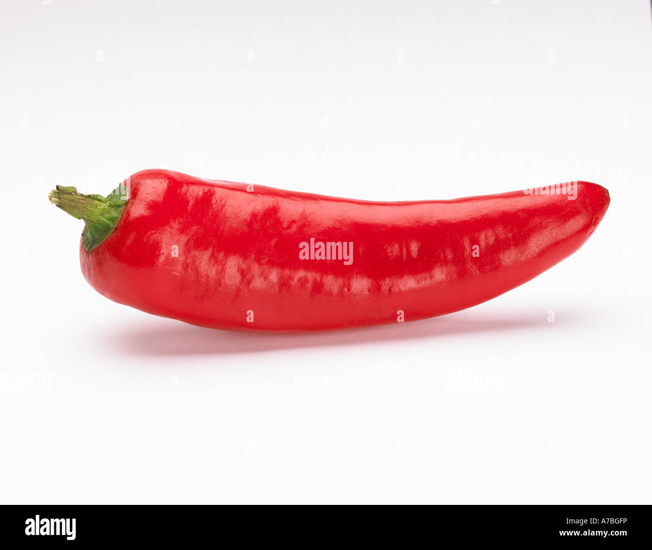 SINGLE RED HOT CHILLI PEPPER ON WHITE BACKGROUND - Stock Image