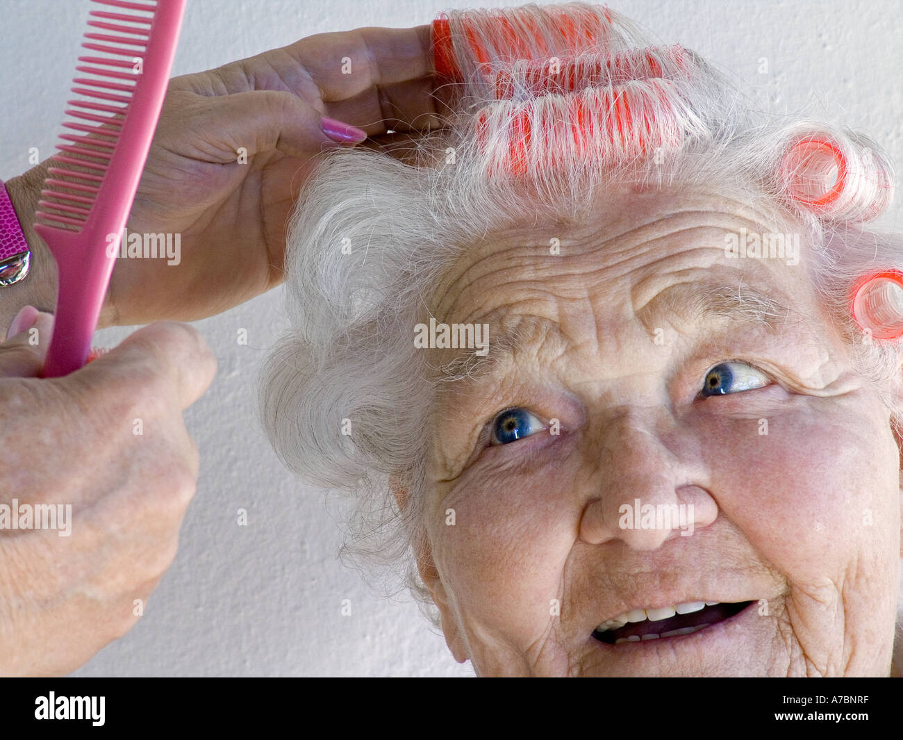 Smiling senior elderly lady having her hair put in curlers by carer companion hairdresser - Stock Image