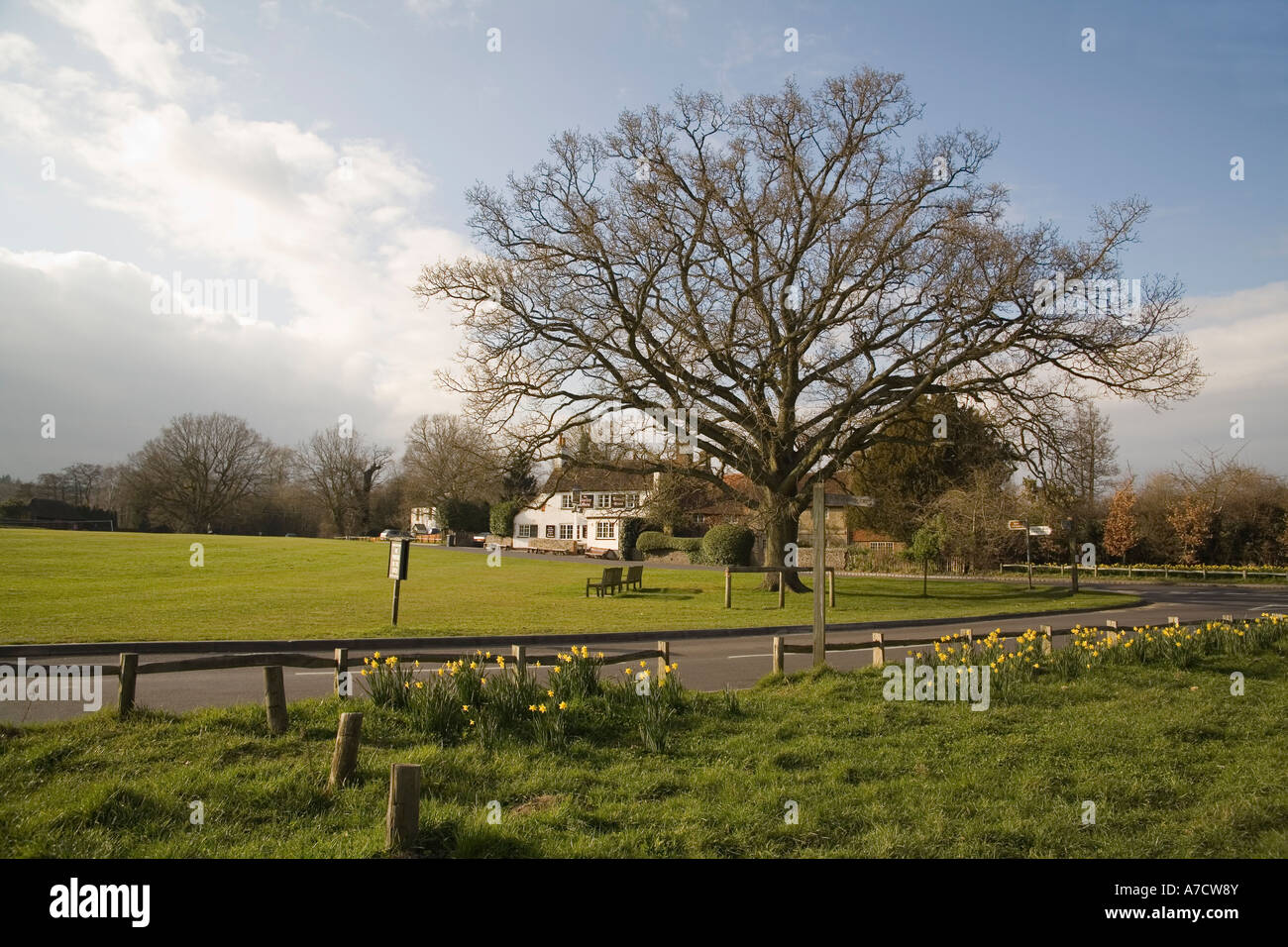 TILFORD SURREY UK March Looking across the daffodil surrounded village green towards the popular Barley Mow Pub - Stock Image
