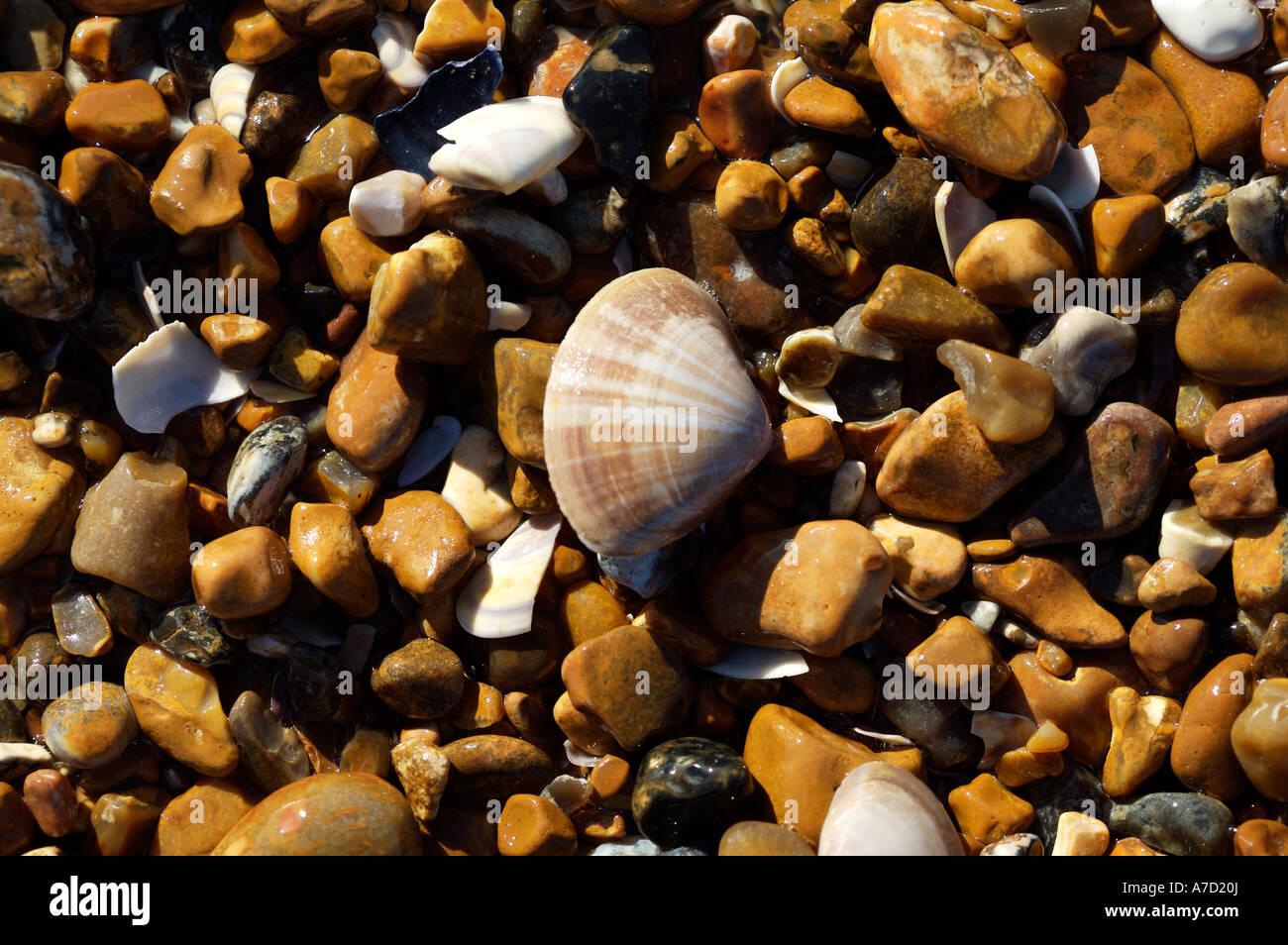 Beach, Pebbles & Shells - Stock Image
