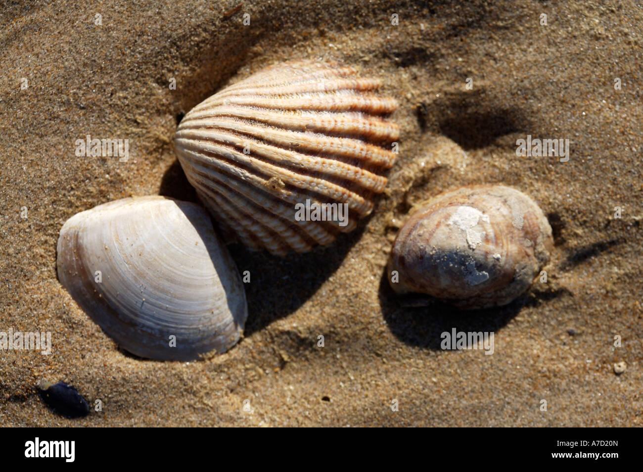 Beach Shells - Stock Image