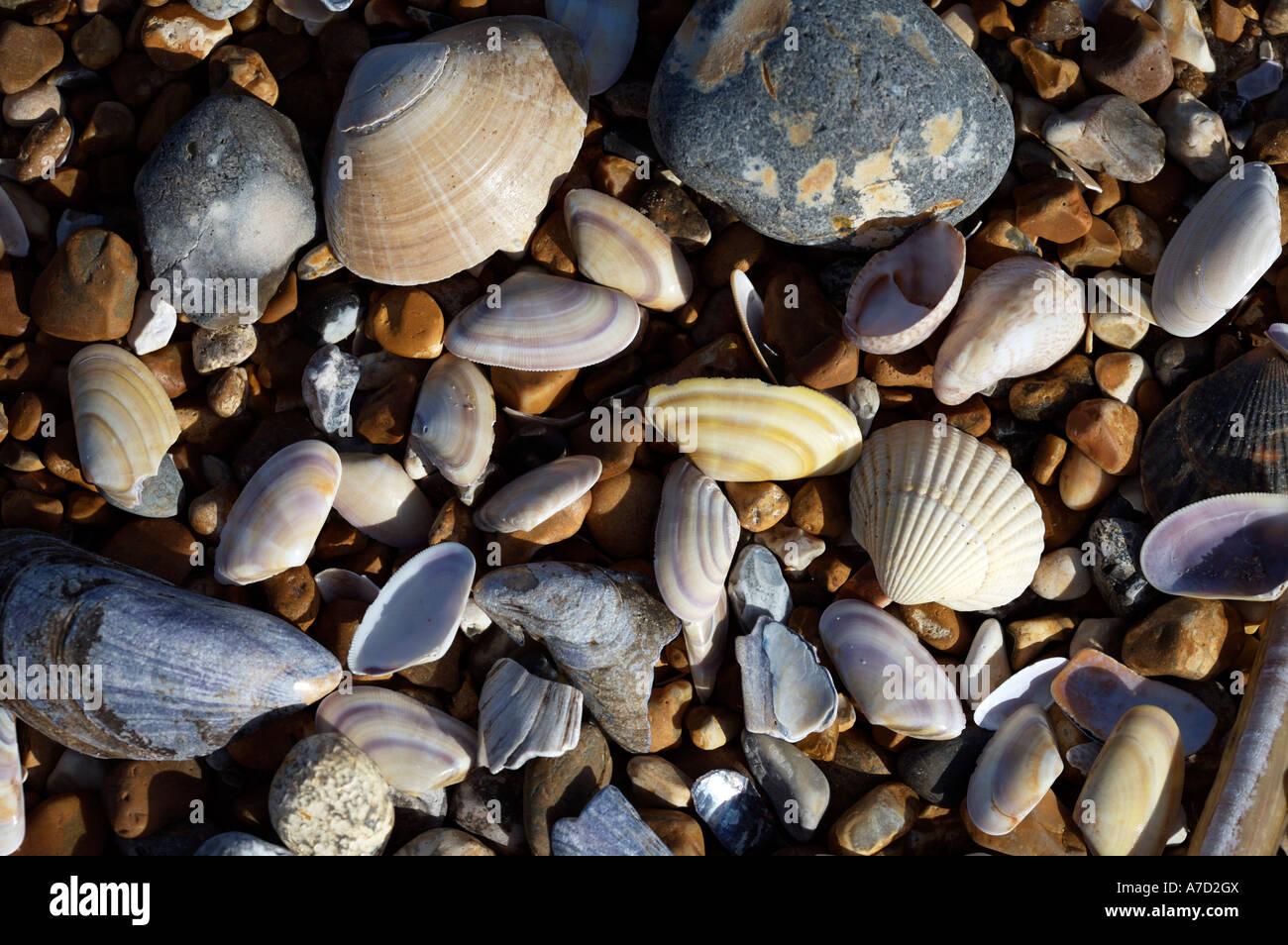 Sea Shore Shells And Pebbles - Stock Image