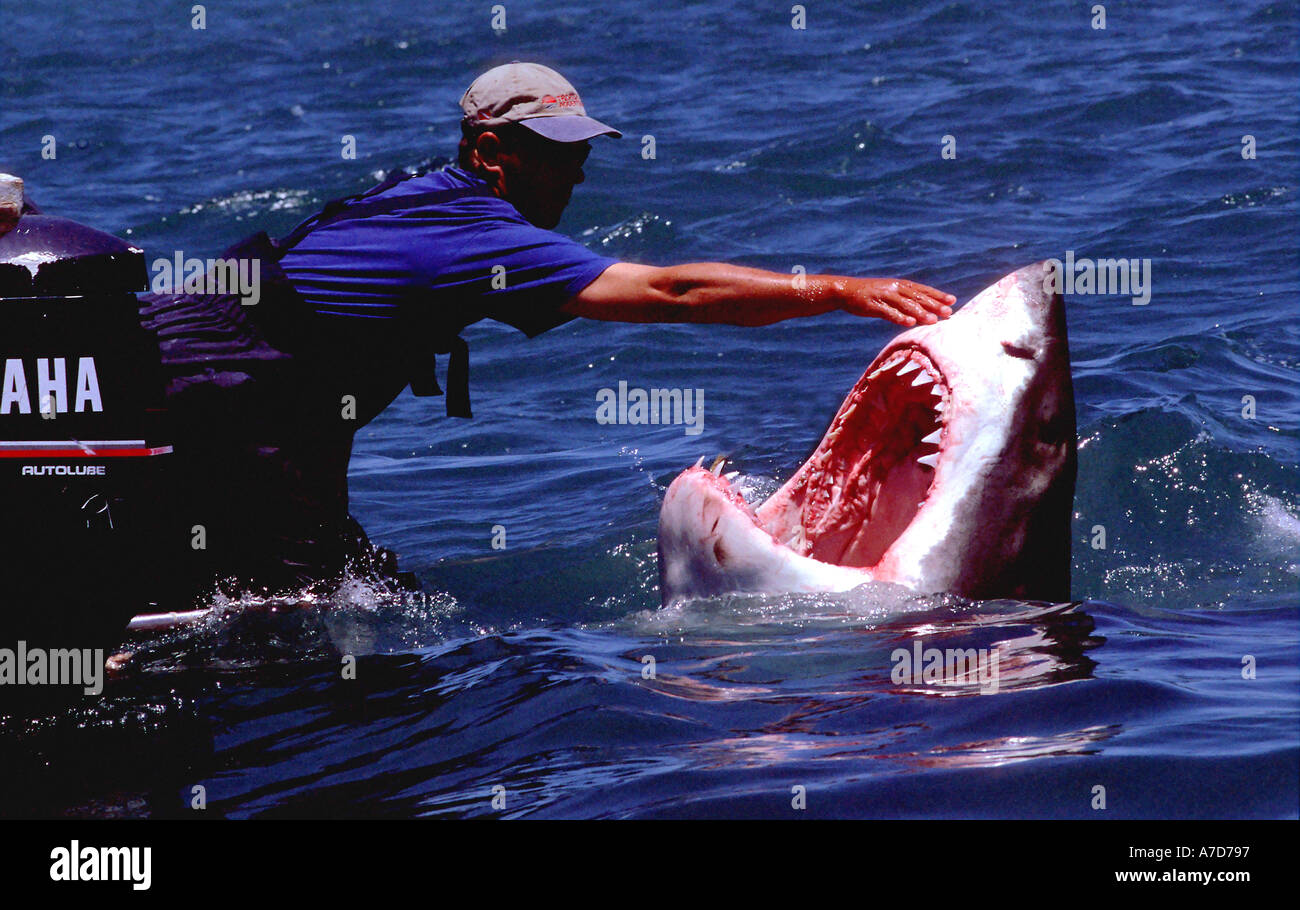 Mackeral Sharks Stock Photos & Mackeral Sharks Stock Images - Alamy