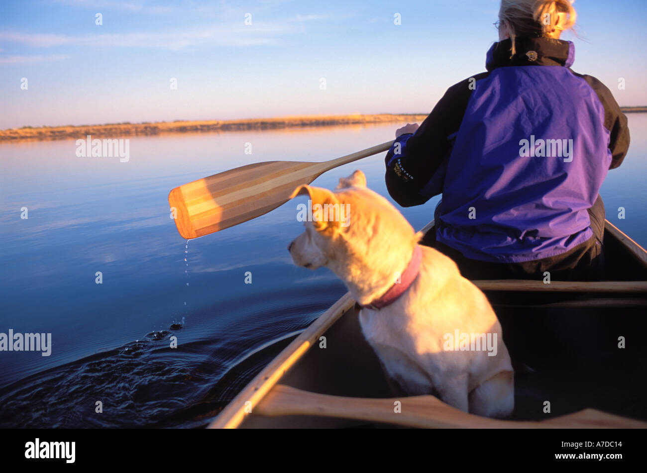 Woman and dog canoeing Zippel Bay State Park Minnesota MR - Stock Image