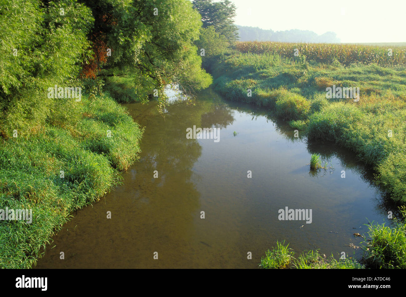 Corn field and buffer strip along the Salt Creek in Dewitt County Illinois - Stock Image