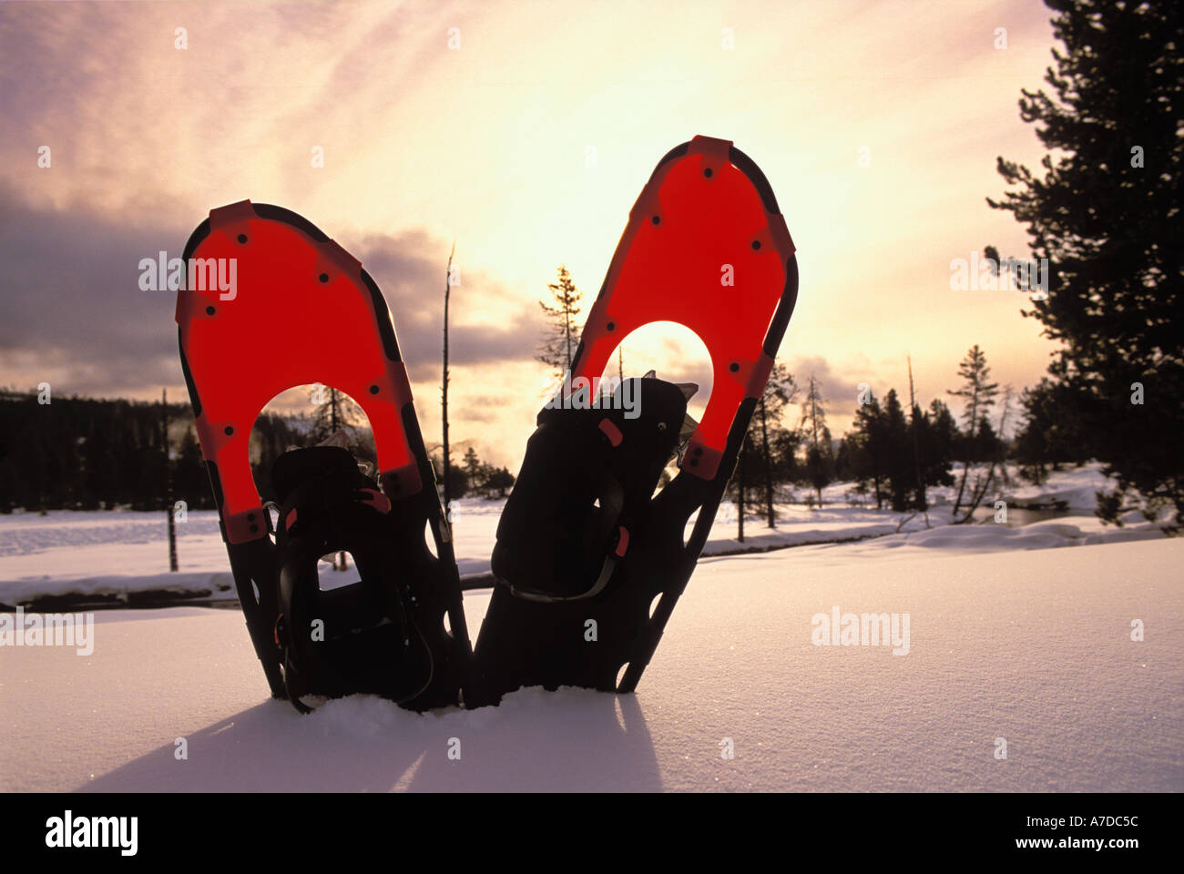 Snowshoes in the snow along the Firehole River in Yellowstone National Park Wyoming - Stock Image
